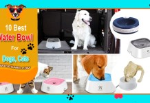 Top 10 Best Water Bowl For Dog Reviews