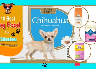 Top 5 Best Chihuahua Dog Food Reviews