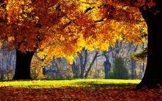 Autumn Wallpapers (7)