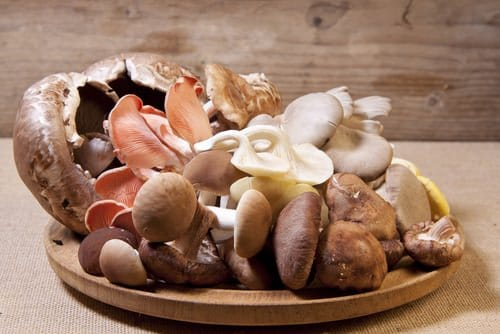 How To Say Mushrooms