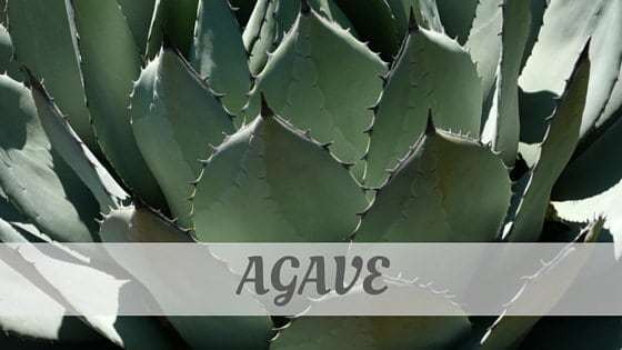 How To Say Agave