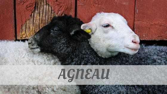 How To Say Agneau