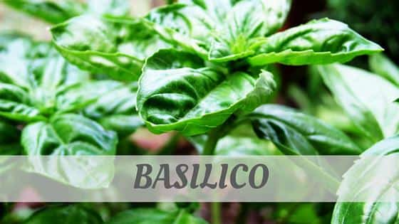 How To Say Basilico