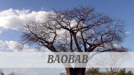 How To Say Baobab