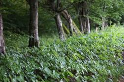 Park w Sztynorcie - samorosty