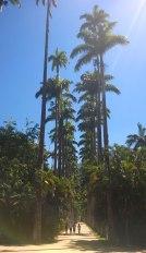 Ogród Botaniczny w Rio