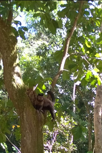 Jedna z małpek w Ogrodzie Botanicznym