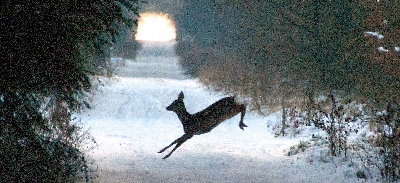 deer crossing trail