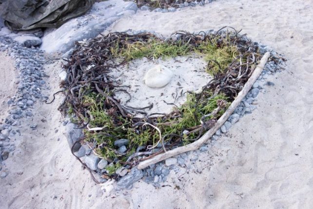 Coeur en coquillage beach art facile avec enfant
