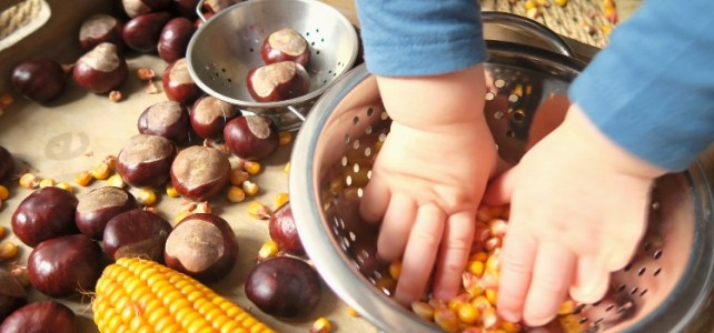 plateau sensoriel automne avec maïs activité bébé montessori