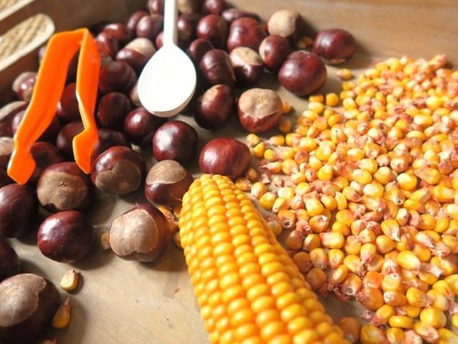 plateau sensoriel maïs et marrons activité bébé automne