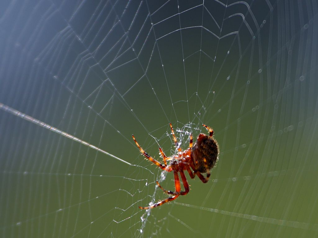 How Does A Spider Make A Web And Why Doesn T It Get Stuck