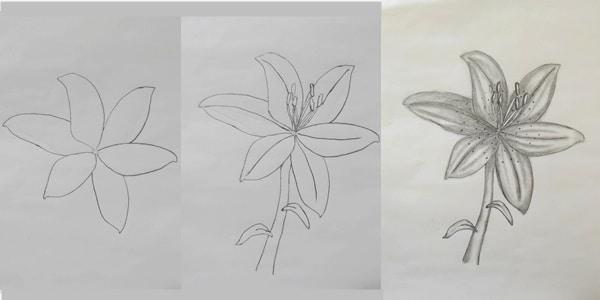 Draw-a-Lily-20200721