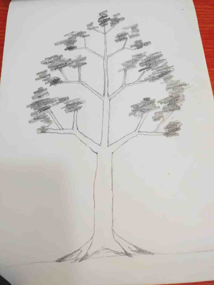 Draw a Tree 2020072708 - How to Draw a Tree: Step by Step Practice for Beginners