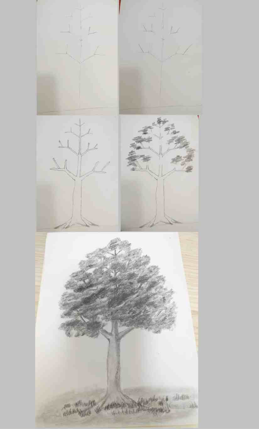 Draw a Tree 2020072711 - How to Draw a Tree: Step by Step Practice for Beginners