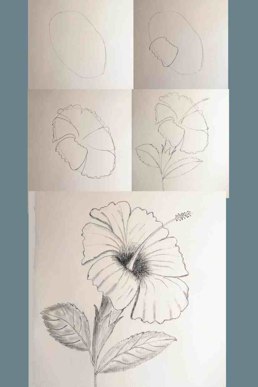 Draw Hibiscus 2020080108 scaled - How to Draw Hibiscus for Beginners Step by Step