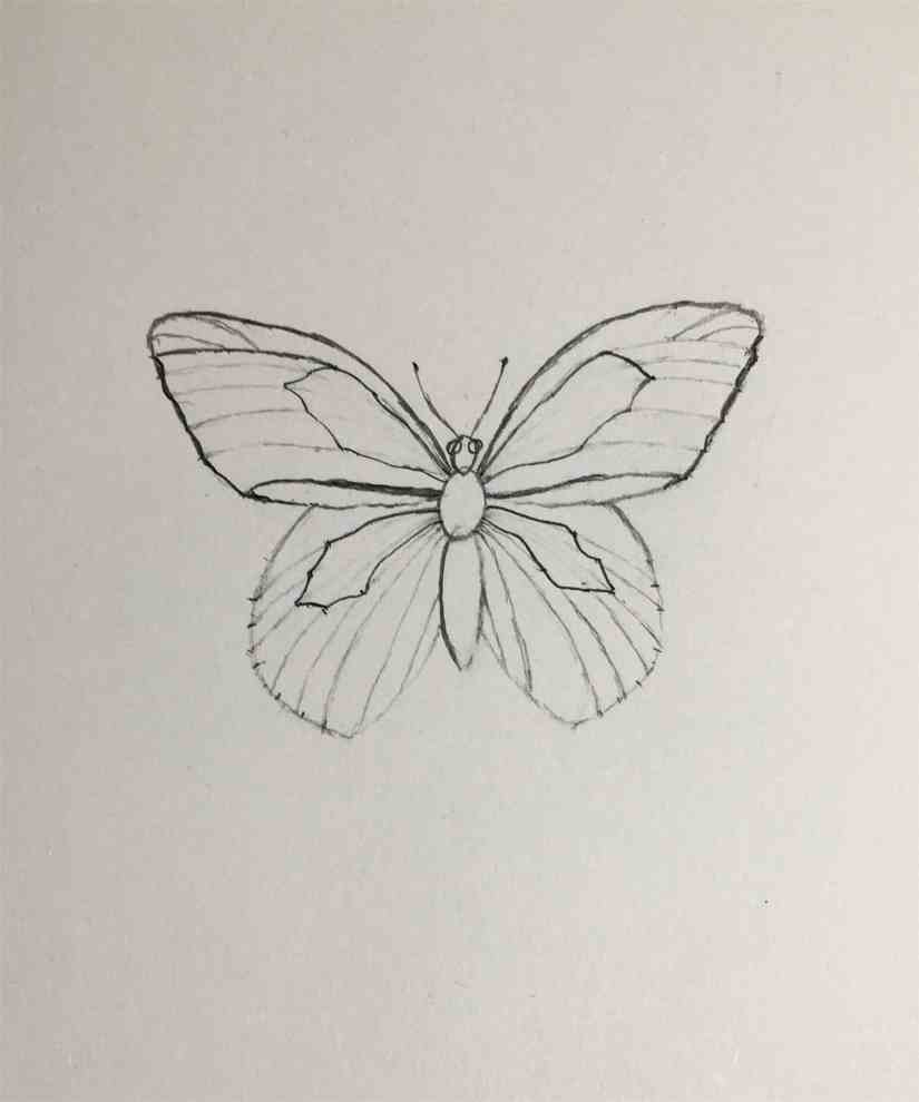 Draw a Butterfly 2020092309 - How to Draw a Butterfly-Step by Step Tutorial