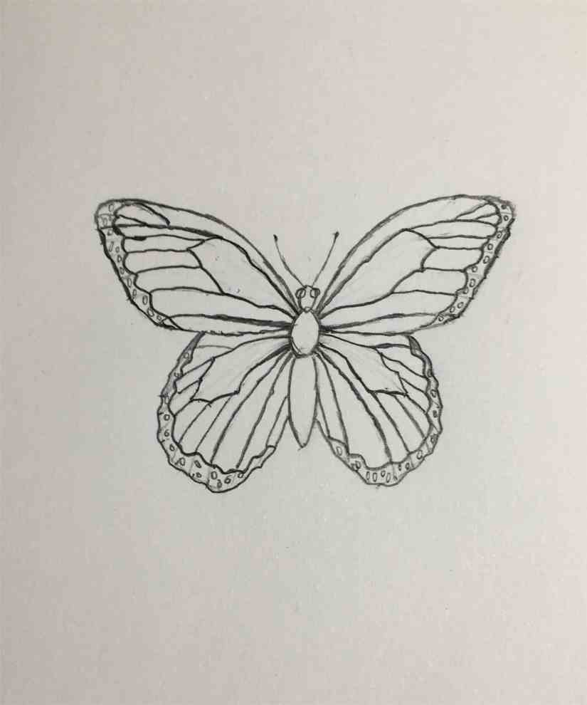 Draw a Butterfly 2020092310 - How to Draw a Butterfly-Step by Step Tutorial