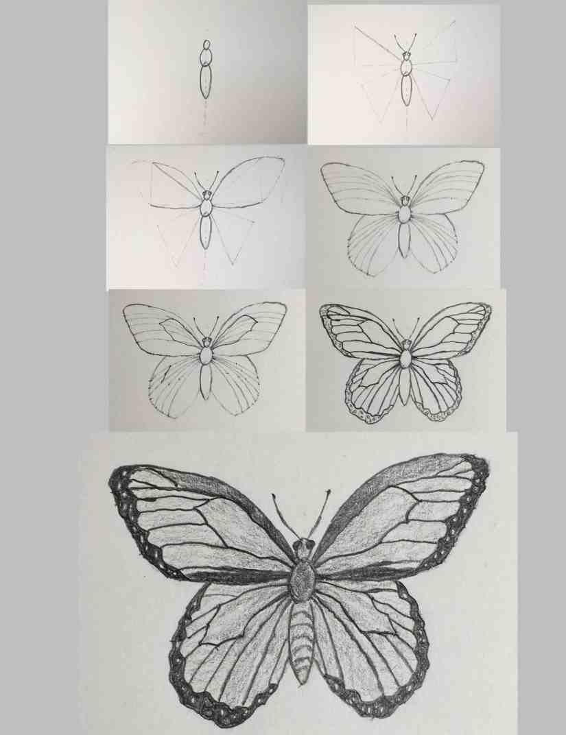 Draw a Butterfly 2020092312 scaled - How to Draw a Butterfly-Step by Step Tutorial