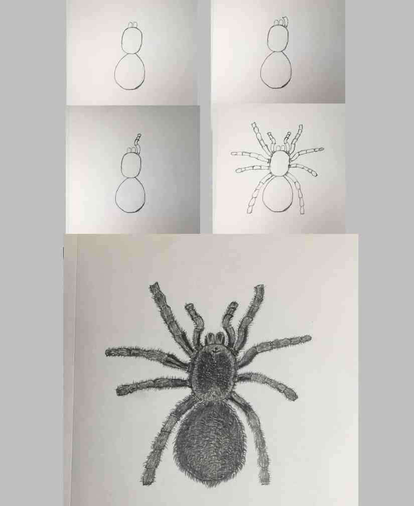 Draw a Spider 2020101306 - How to Draw a Spider for Halloween - Step by Step