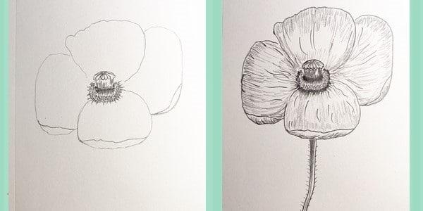 Draw-a-Poppy-20201221