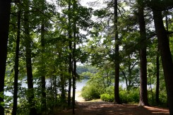 View of Walden pond through the trees.