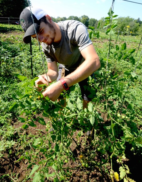 Parker Brophy fixes tomato plants at the farm.