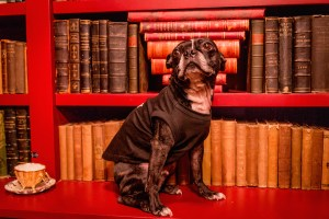 Serpentine Books' mascot, Guinness.