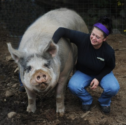 Jamie Cruz and Patty, Springdell's 1,000-pound pet pig. Photo by Tory Germann.