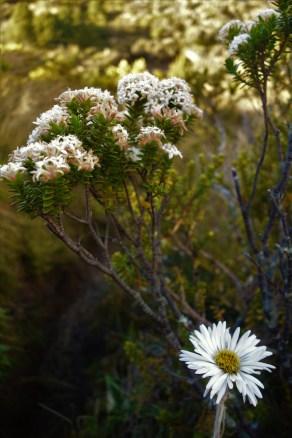 Day 1 - alpine flowers