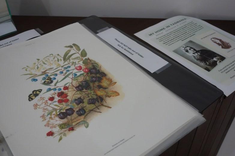 Louisa Anne Meredith's work
