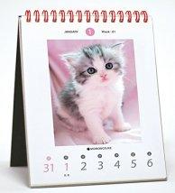 仔猫卓上カレンダー
