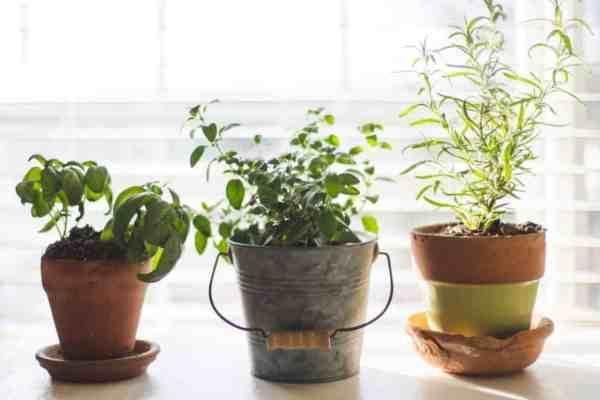 Darkening hair rinse with 3 herbs | DIY