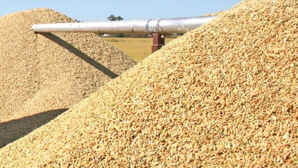 Image result for rice production in Nigeria image