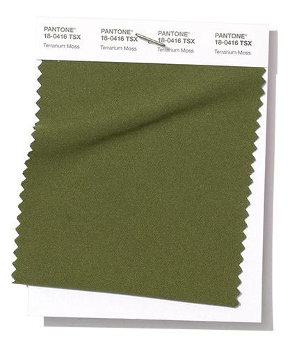 Terrarium Moss Color