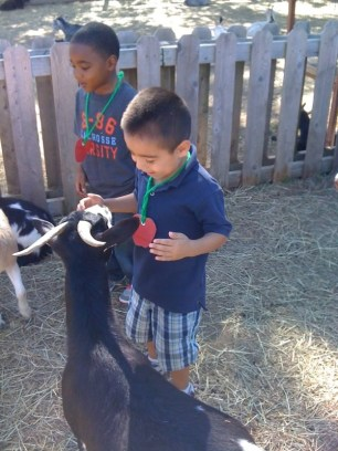 a little boy is petting a goat