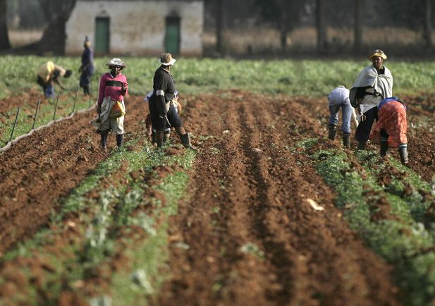female farm workers