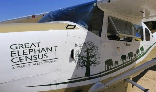 Great Elephant Census airplane graphics
