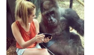 Lindsey Costello and a gorilla at a zoo