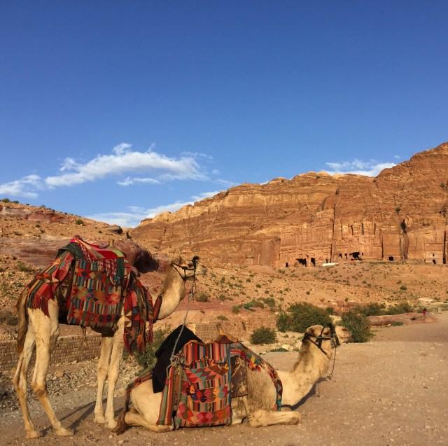Petra camels March