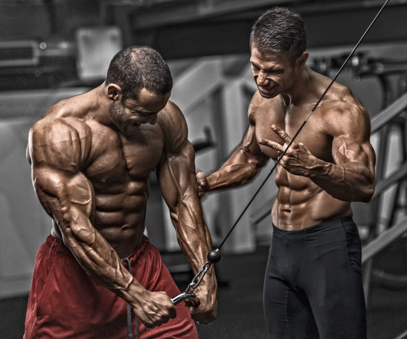 Muscle Building Vs. Muscle Toning