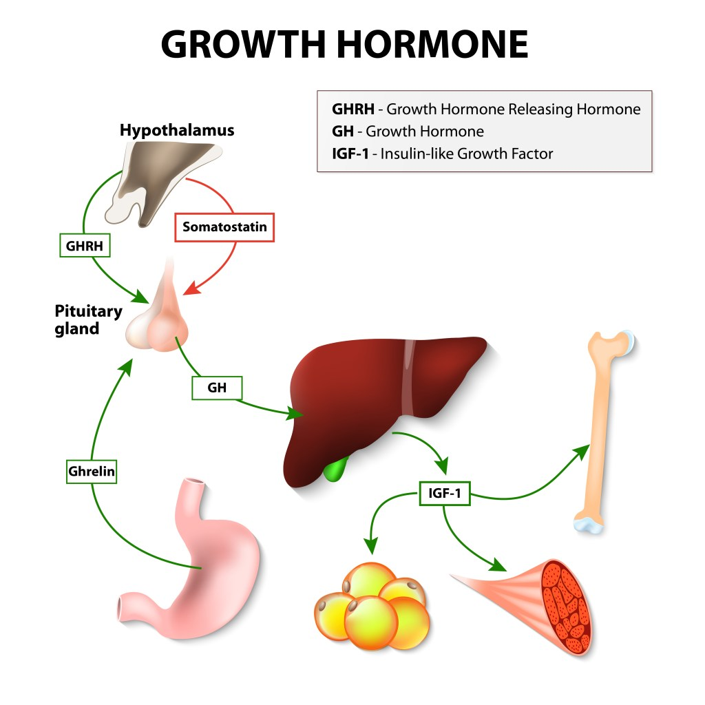 Growth Hormone Activation