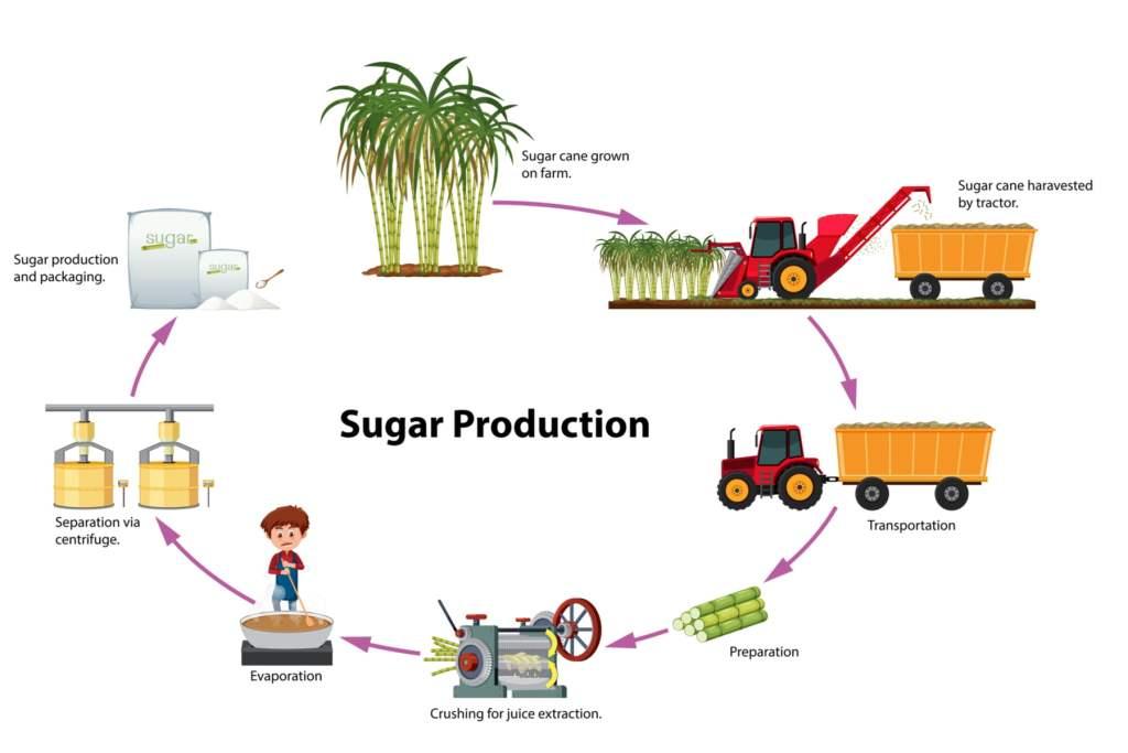 cut dietary sugar