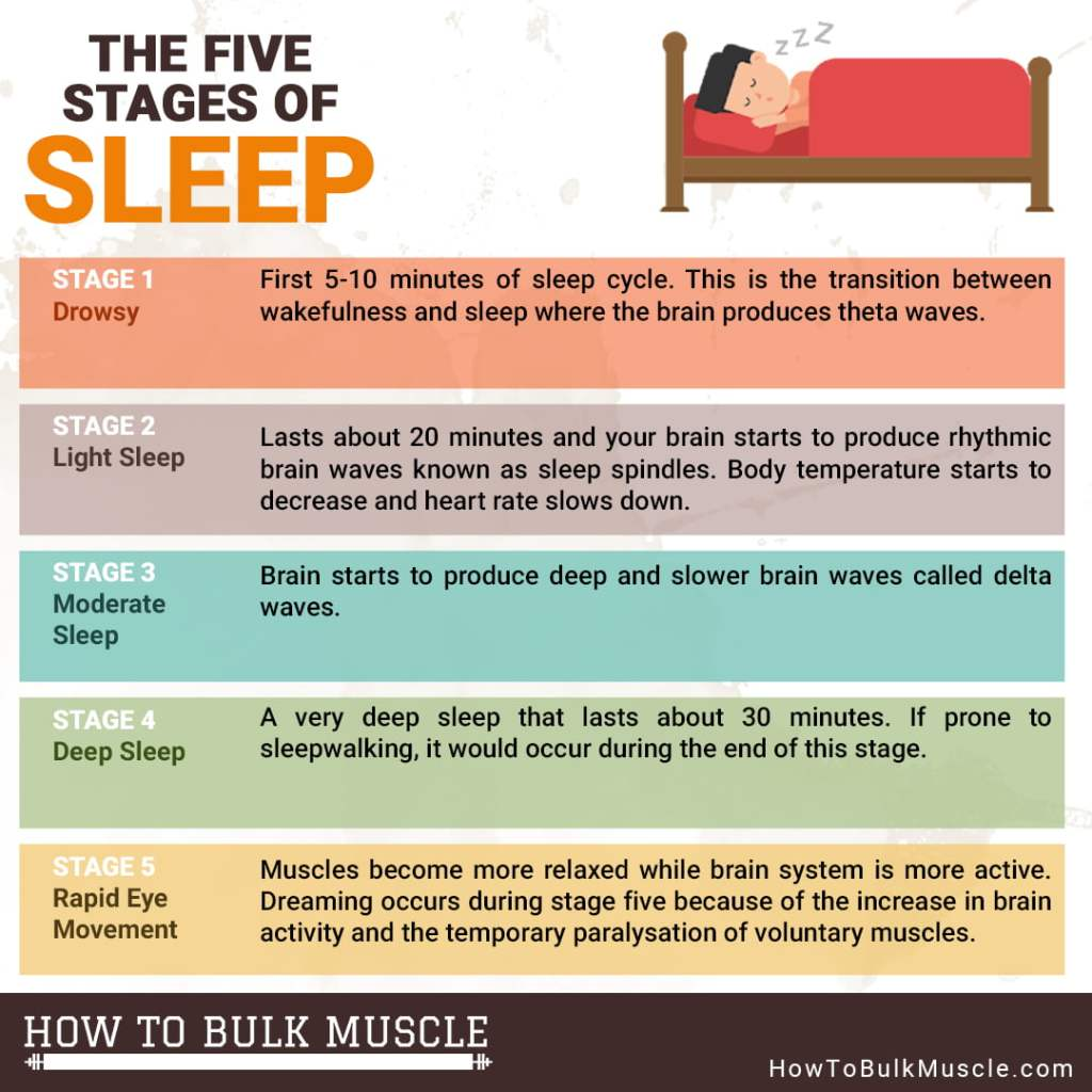 5 stages of sleep infographic