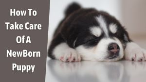 How To Take Care Of A NewBorn Puppy
