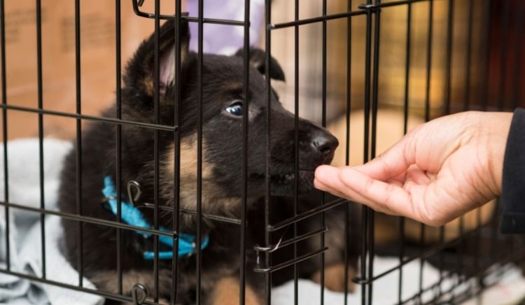 How To Train A Puppy In A Kennel
