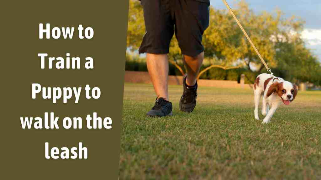 How To Train A Puppy To Walk On The Leash