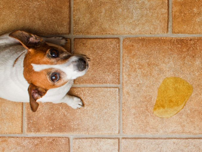 How to Clean Dog Urine