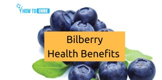 Bilberry Health Benefit