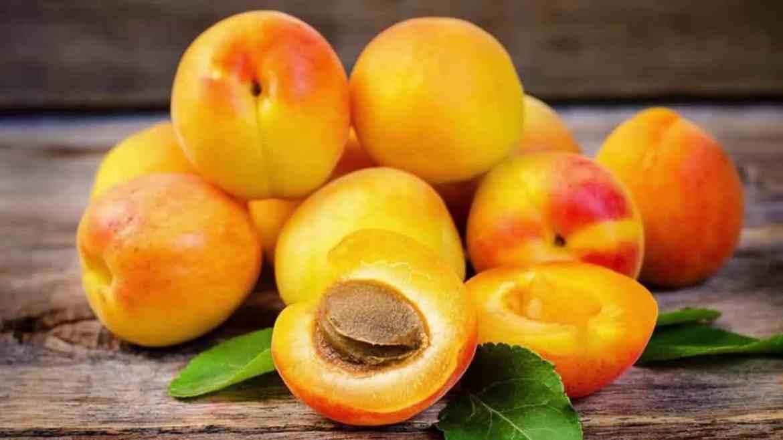 apricots for diabetes